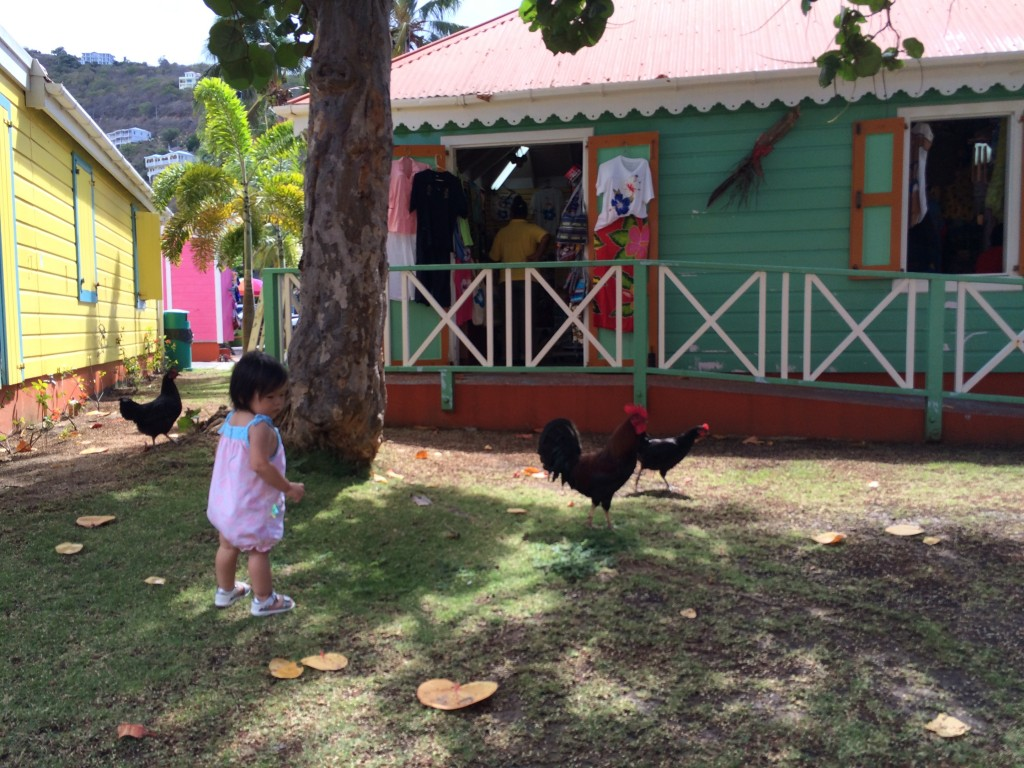 Lyra chasing chickens in Tortola
