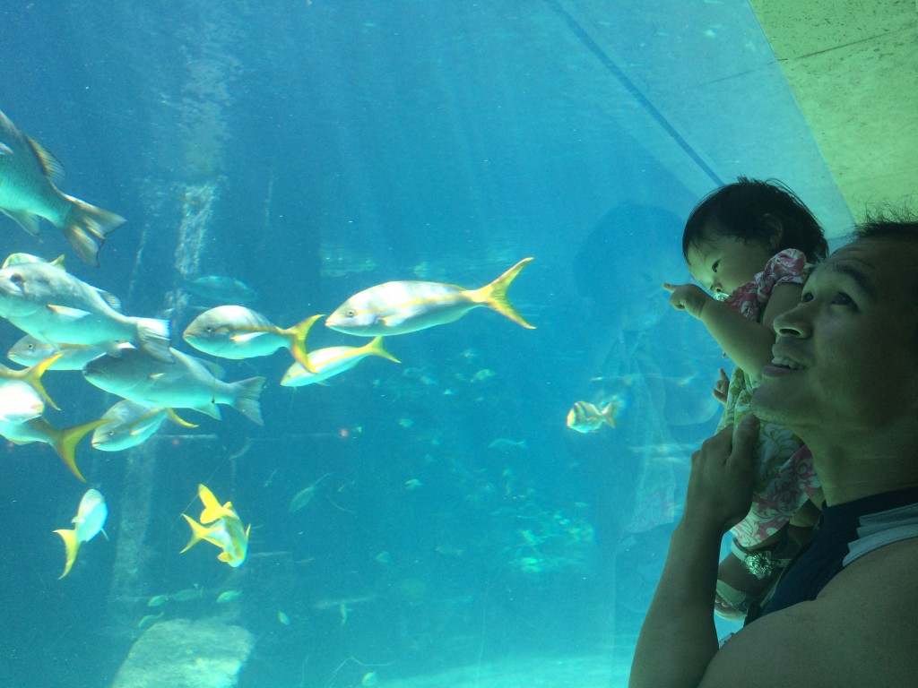 Showing Lyra the colorful fish at Atlantis resort.